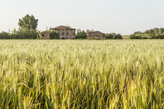 (maxlaurenzi) Tags: italy house colors field vintage river walking relax spring corn country mantua secchia moglia