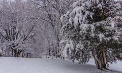 DSC01616-2 (johnjmurphyiii) Tags: winter usa snow connecticut shelly cromwell originaljpeg johnjmurphyiii 06416 sonycybershotdsch90