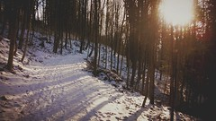 Snow path (lady_saneth) Tags: trees sun snow nature beautiful weather forest path