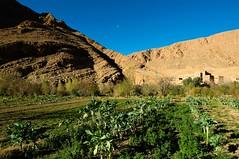 Gorge Toudra Zaouia, Tinghir, Morocco (rosella sale) Tags: africa travel landscape natura marocco viaggi montagna viaggio verdure tinghir todra villaggio cieloblu coltivazione toudra rosellasale fotorosellasale gorgetoudrazaouia