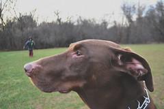Lucy (alexiscooperphotography) Tags: portrait pet macro animal naturallighting petme dogportrait doglife animallovers creativephotography dogsrock nikond3100
