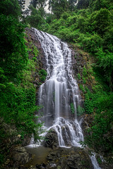 Tristania Falls, Dorrigo National Park, (affectatio) Tags: waterfall rainforest sony falls waterfalls nsw newsouthwales dorrigonationalpark 1118mm tristaniafalls wongawalk a77mk2