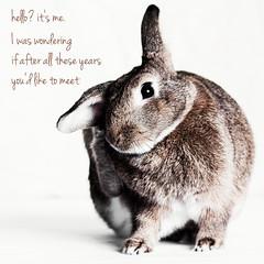 Hello Bunny (Jeric Santiago) Tags: hello pet rabbit bunny feet animal lyrics conejo adele lapin hase kaninchen   winterrabbit