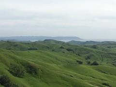 Lush (harrington.matthew) Tags: cali california highway1 pacificcoasthighway cayucos