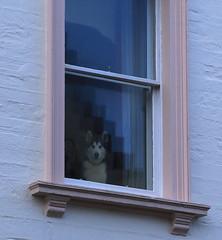 Being Watched (falkirkbairn) Tags: shetland
