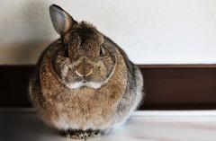 Donnie (santiagomcarbonell) Tags: rabbit conejo animales