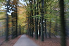 Dans la fort (RW-V) Tags: autumn trees forest herbst herfst nederland thenetherlands bos wald paysbas fort apeldoorn niederlande gelderland woud 100faves 150faves sooc canonefs1755mmf28isusm 80faves 120faves paleisparkhetloo lautumne canoneos70d