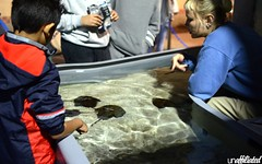 Night at The Aquarium (Unaffiliated Fam) Tags: life california county sea orange fish beach coral penguin aquarium penguins shark marine long king underwater pacific crab otter jelly fam reef creatures biology otters hammerhead the unaffiliated of