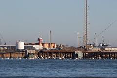 Place for Pelicans (WalrusTexas) Tags: ocean sky bird tower water pier boat dock tank pelican infrastructure cormorant portaransas anthropocene