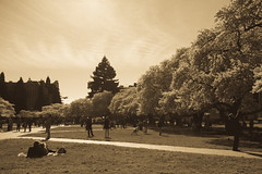 IMG_9447 (elenafrancesz) Tags: uw cherry blossoms wordless