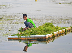 Algae Removal 2 (Luzon Jim) Tags: photo outdoor philippines algae journalism nikond5100