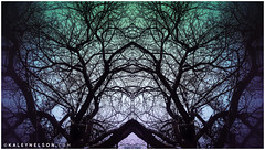 kaleynelsonsym20_1 (kaleynelson) Tags: trees abstract tree nature landscape meditate symmetry mirrored symmetric symmetrical meditation psychedelic spiritual chakra chakras alexgrey sacredgeometry kaleynelson