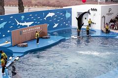 20160227-04 (GenJapan1986) Tags: film animal japan aquarium dolphin   miyagi   2016     nikonnewfm2 fujifilmfujicolorsuperiaxtra400