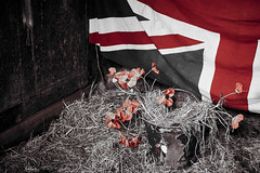 made in england (nigelboulton72) Tags: england war remember poppy unionjack