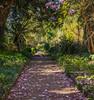 kilmac-7 (john_photo1) Tags: flowers trees reflection water oldbuildings eire wicklow opw kilmacurragh elementsorganizer