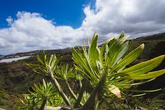 Blue & Green (DOKTOR WAUMIAU) Tags: travel grancanaria landscape spain nikon wideangle tokina lightroom ishootraw d7200 vscofilm