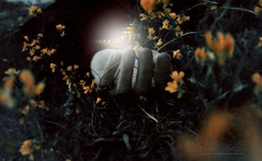 """Light Stolen"" (tatiana_tcf) Tags: flowers light orange night butterfly fly dream"