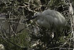 _DSC0439 (chris30300) Tags: france heron de pont parc oiseau camargue gau saintesmariesdelamer flamant provencealpesctedazur ornithologique
