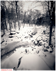 The last of the snow (DelioTO) Tags: winter snow ontario canada rural landscape blackwhite woods trails pinhole 4x5 february toned f250 natparks autaut aph09 panx50