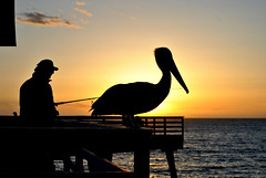 DSC_3328 (Eleu Tabares) Tags: ocean california sunset sea bird beach water fishing pelican pismo