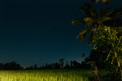 Bali Night (Oliver J Davis Photography (ollygringo)) Tags: travel sky bali plants tree green nature field night dark indonesia stars photography asia southeastasia silent rice paddy farm farming dream tranquility palm illuminated crop dreamy agriculture starry tranquil hdr fronds ubud