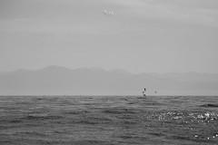 horizontes (betho itinerante) Tags: color textura luz sol azul atardecer mar agua playa paisaje aves dia movimiento bn diagonal cielo nubes contraste perspectiva aire olas detalles libre suave linea horizonte reflejos piedras blanconegro tranquilidad ocano arista relajacin placentero
