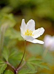 Spring 2016 - 863 LBG (Lostash) Tags: life flowers plants nature gardens spring flora seasons leicesterbotanicalgardens