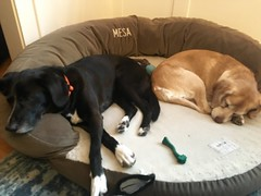 Letting sleeping dogs lie.