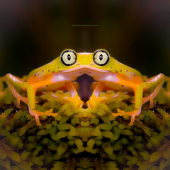 c a e s i l l y a n (epiclectic) Tags: reflection animal photoshop mirror design graphic wildlife humor perspective manipulation images symmetry reflect symmetrical mutant twisted enhancement epiclecticcom epiflection epiflectionbyepiclecticcom