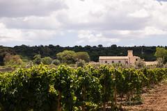 moscato chiesa 1 (solacium wine resort) Tags: castle tour wine winetasting syracuse sicily castello sicilia siracusa visite moscato degustazioni targia solacium moscatodisiracusadoc
