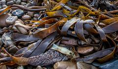 Sea weed on shore (gbird521) Tags: sea beach scotland weed egg sack caithness latheron