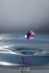 Violette en suspention-1 (vdb.pierre) Tags: macro eau goutte grosplan violette macrophotographie sirot pierrevdbphotographe