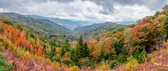 The Great Smoky Mountains (Jarrett Jones) Tags: autumn mist mountains tree fall nature rain fog canon landscape jones highway tn outdoor tennessee great foliage trail ii r gatlinburg smoky 441 jarrett 2470 5ds 5dsr