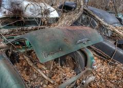 DSC08590.ARW-02 (juice95m3) Tags: abandoned rust vintagecar automobile junkyard oldcars classiccars