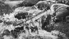 B&W-00687 (alessandro.polla) Tags: bridge blackandwhite bw italy mountains ice nature water river landscape woods iced woodbridge tentino