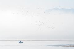 Marismas de Santoa (Juan Ig. Llana) Tags: mar aves pjaros niebla cantabria afc bote santoa marismas bandada tamronsp180adaptall2