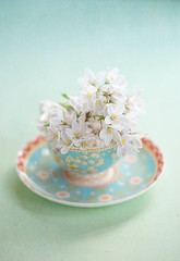 Cup of prettiness (borealnz) Tags: flowers white cup spring pretty blossom
