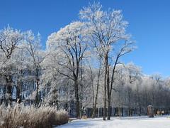 Schlosspark in Molsdorf (germancute) Tags: park schnee winter snow ice nature germany landscape deutschland thüringen outdoor thuringia eis landschaft molsdorf germancute