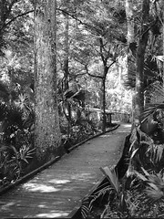 Boardwalk (nrparsons) Tags: park trees blackandwhite bw plants film nature outdoors blackwhite 645 state pentax walk shade boardwalk kodaktx wekiwasprings 75mmf28 120kodaktx