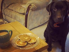 Day 061/366 (hanj_16) Tags: wood red brown green home cakes glass st project puppy table living lab labrador day tea chocolate room plate olympus mug welsh 365 collar hank davids 366