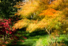Gold and Green (Eileen Wilkinson (Vistna)) Tags: autumn trees colour westonbirt