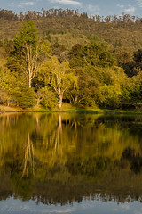 Golden Forest (davo.pineros) Tags: autumn trees lake nature water forest reflections landscape reflex mirrors goldenhour openair waterreflections landscapephotography magiclandscape watermirrors