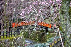 Plum Blossoms at Kitano Tenman-g in Kyoto. (KyotoDreamTrips) Tags: japan kyoto ume matsuri  plumblossoms  baikasai  michizane kitanotenmang nightingalebridge