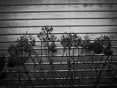 Ricoh GR II : March 4, 2016 (takuhitofujita) Tags: flickr eyefi ricohgrii eyeficloud
