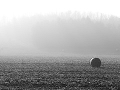 Remember November... (un2112) Tags: morning november autumn blackandwhite bw mist fall fog rural landscape countryside corn hungary outdoor hay agriculture bale agricultural g7 sülysáp