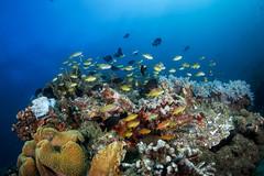 Reeftop in Anda Bohol (Luko GR) Tags: fish coral underwater philippines bluewater wideangle diving bohol anda reef visayas anthias basslets reeftop