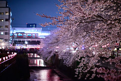 Crossing Station (H.H. Mahal Alysheba) Tags: railroad flower tree japan night river cherry tokyo nikon cherryblossom sakura nikkor sprint d800 58mmf12 noct
