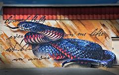 Benalla Street Art #2:  Sirum (krheesy) Tags: streetart brick wall graffiti snake nedkelly benalla bushranger redbelliedblacksnake sirum edwardkelly andrewbourke walltowallfestival