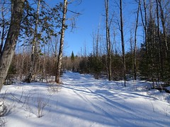 Snowmobile trail/logging path (thepiper351) Tags: forest woods woodlands north maine timberland