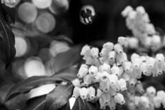 Castell de Nij (Pou42) Tags: bw white black blanco kyoto negro wb blanc japon castillo negre rodalies jap nijo blancinegre castell cercanias japo blancoinegro nij